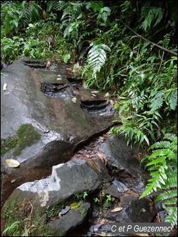 Marches taillées dans la roche près de la première Chute du Carbet