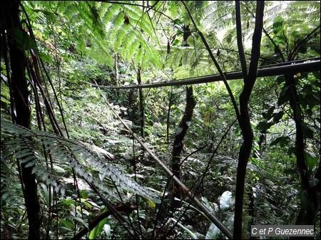 ravine chaude guadeloupe