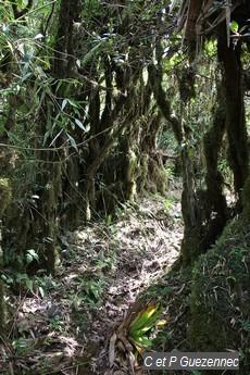 Végétation de crête avec troncs recouvert de mousse