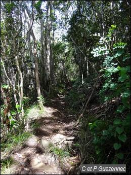 Sentier en sous bois de forêt sèche
