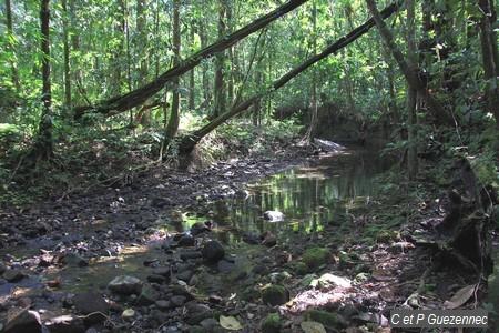 Point de passage sur la rivière du Petit Carbet