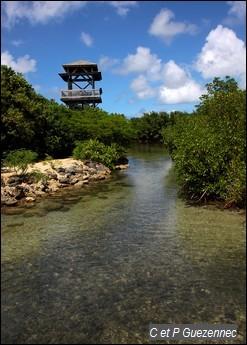 Canal entre la mer et la mangrove