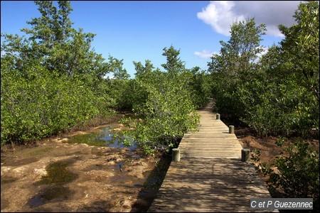 Platelage de visite de la Mangrove