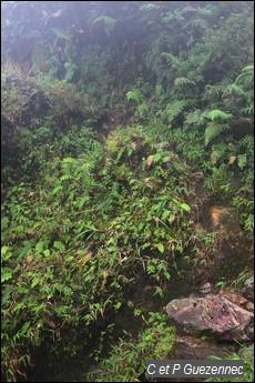 Passage de ravine sécurisée par une corde.