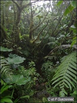 Forêt de mangles montagne