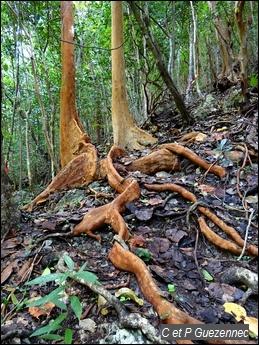 Sentier de la rivi re - Reconnaitre les arbres par leur tronc ...
